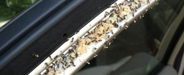 Ants In Car >> Family Returns From 3 Day Vacation To Find Car At Airport Crawling
