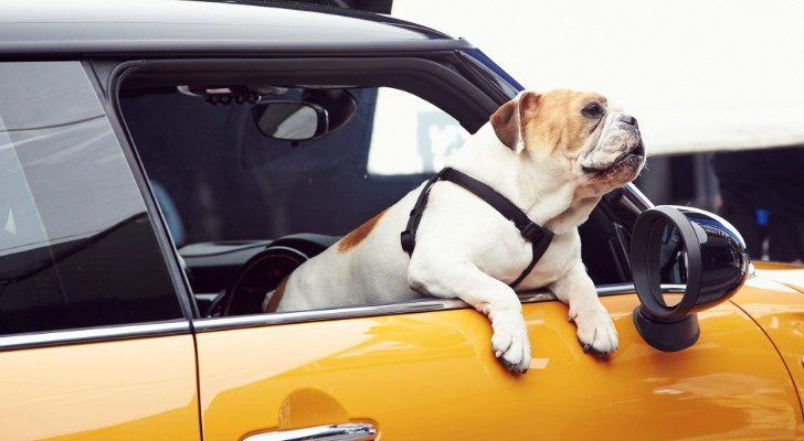 2014 MINI Cooper S Recommended by an English Bulldog