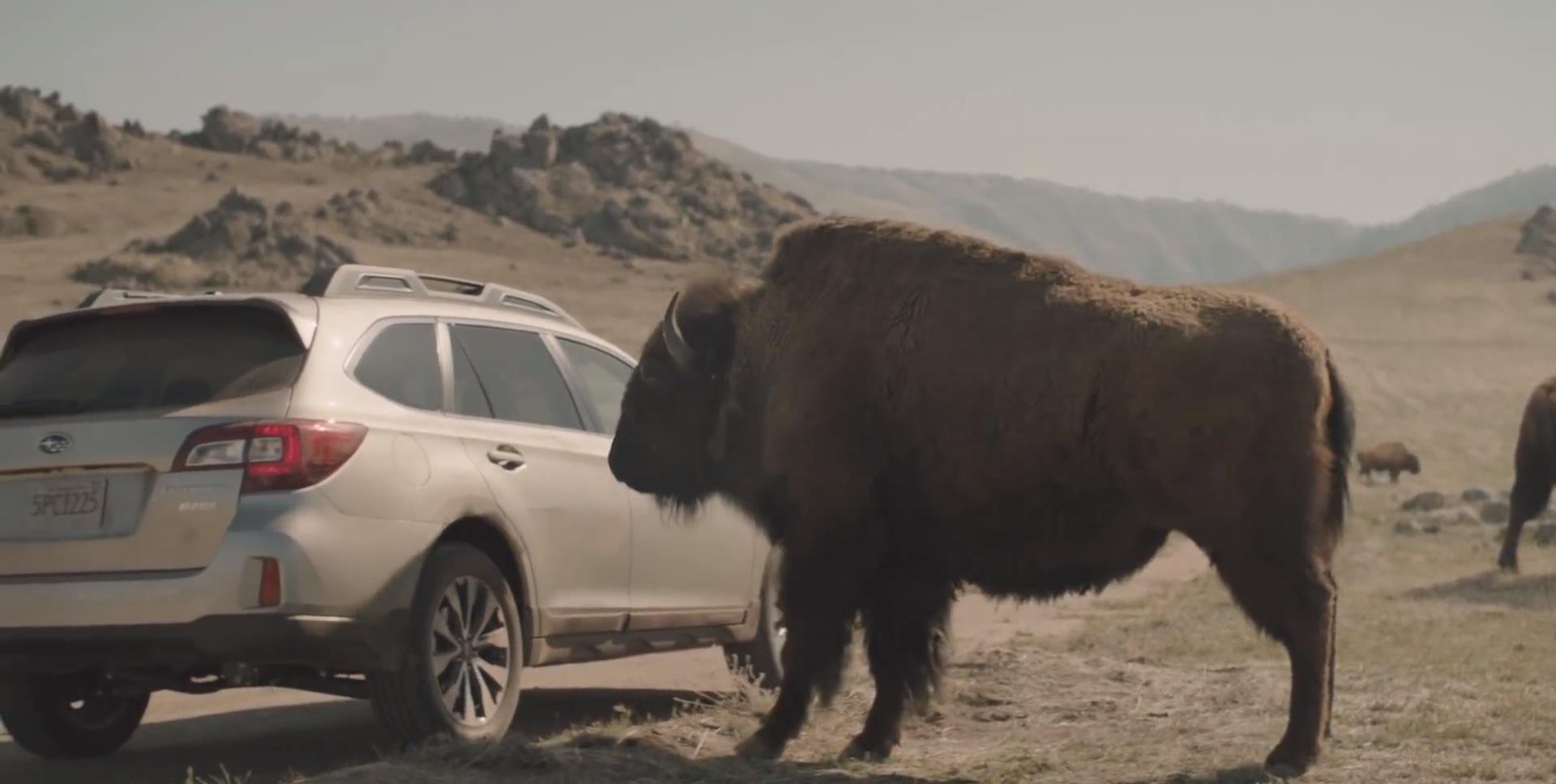 2015 Subaru Outback Commercial Bison Autoevolution