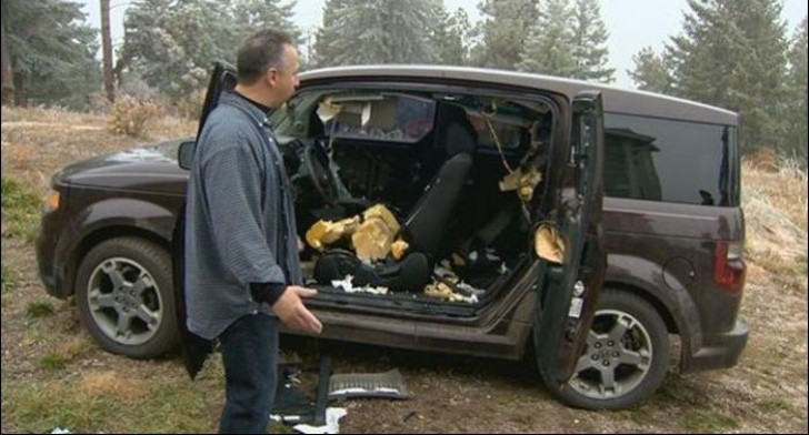 3 bears destroy a parked honda in colorado video photo gallery autoevolution. Black Bedroom Furniture Sets. Home Design Ideas