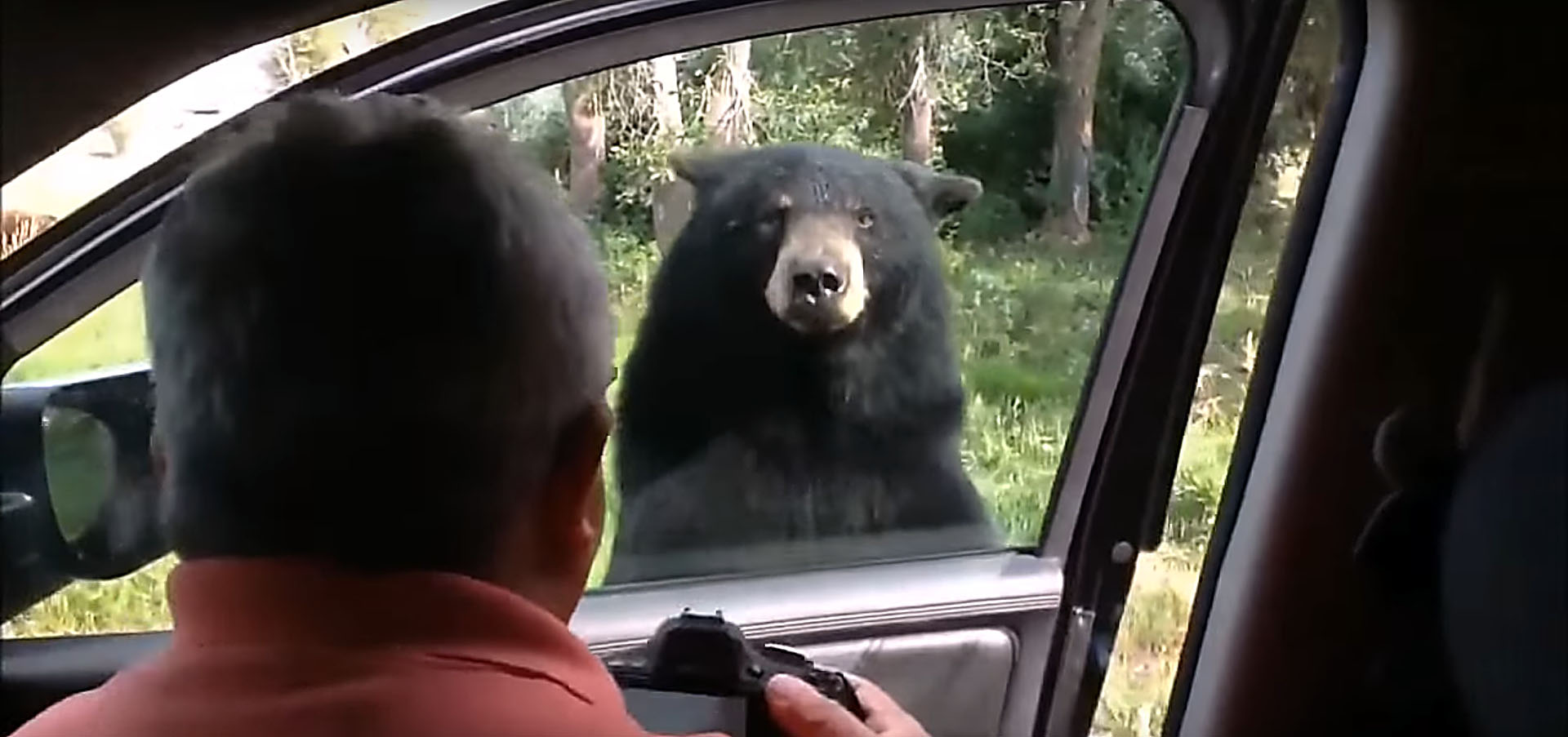 11 photos & A Bear That Used to Be a Doorman Opens Caru0027s Door Scares Everyone ...