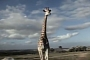 Angry Giraffe Attacks Tourist Vehicle in South Africa [Video]