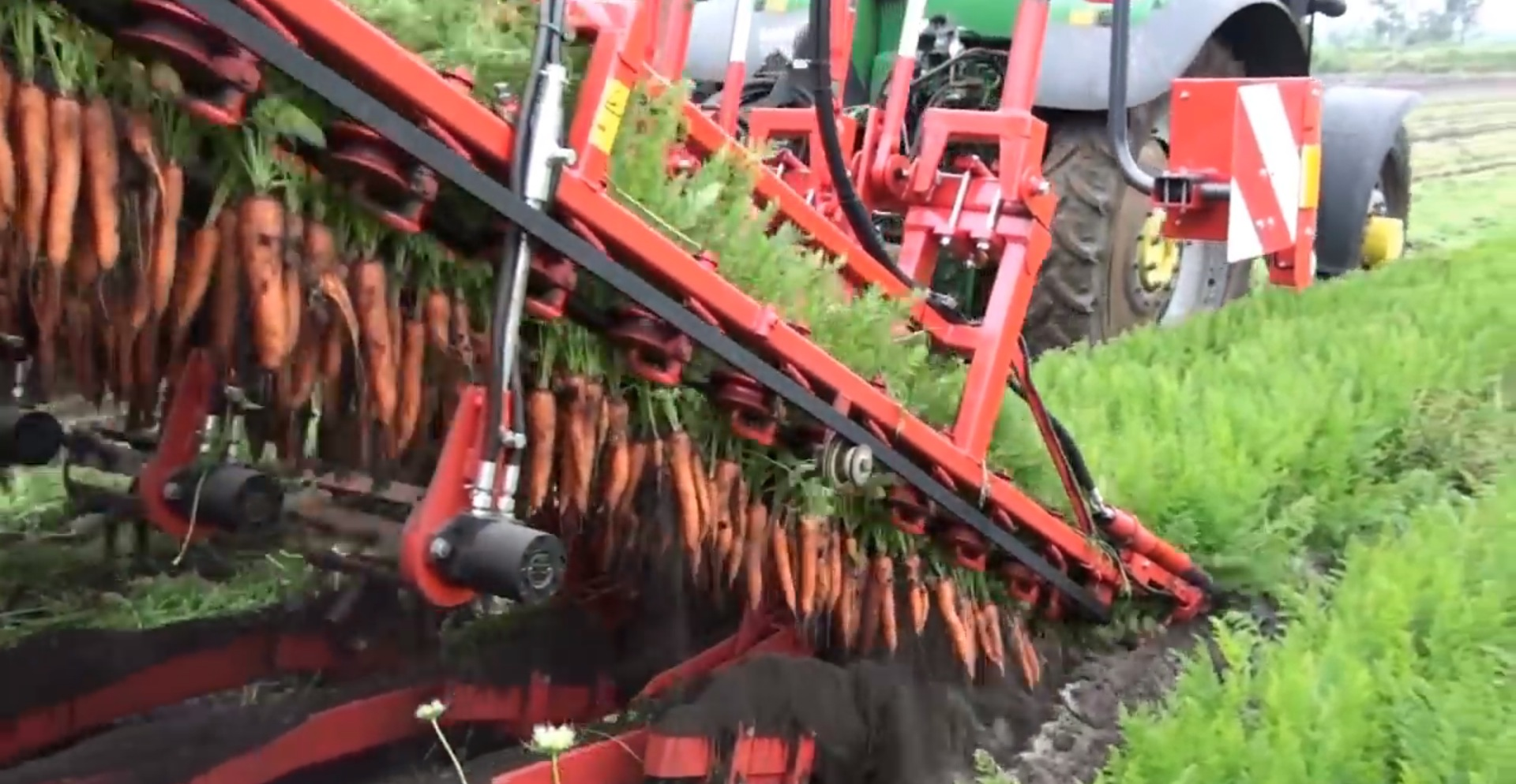 Automated Carrot Harvester Machines Are Mesmerizing To