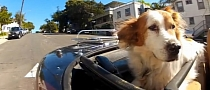 Automotive Humor: Dogs in Cars - California [Video]