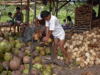 Coconut farmers might get rich with the latest discovery of researchers from the Baylor University