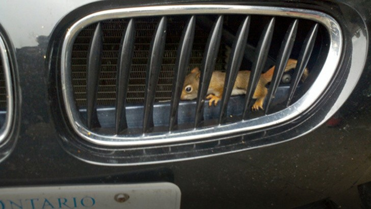 Baby Squirrels Rescued from BMW M Engine