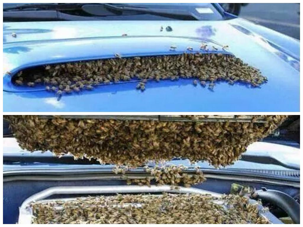 bees-nesting-in-subaru-wrx-sti-intercool