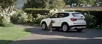 BMW Commercial with X3: Dog vs Google [Video]