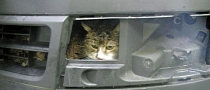 Cat Stuck in Bumper Survives Car Wash and Drive