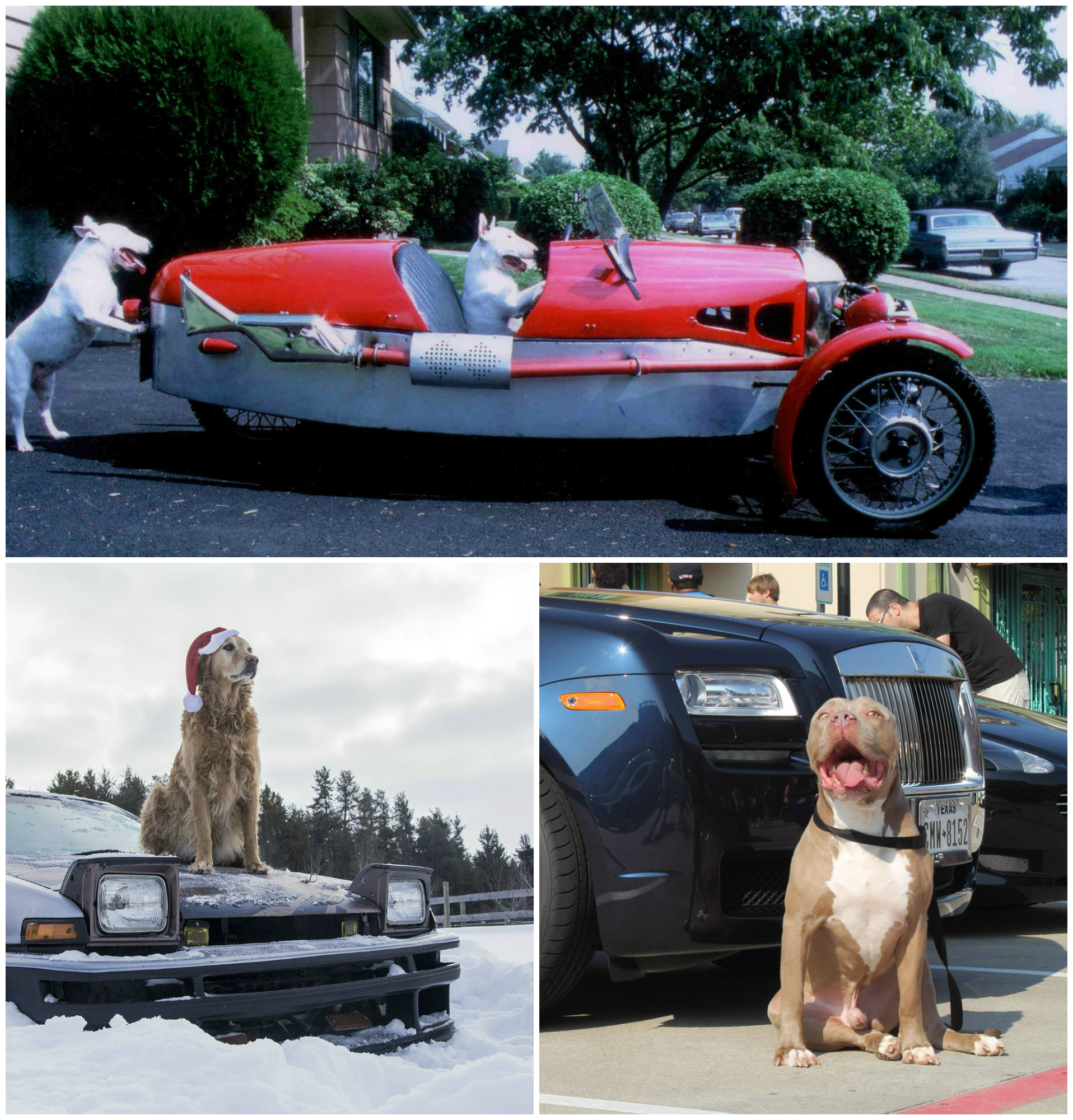Cars And Dogs Is A Really Hot Trend Right Now Autoevolution - Really hot cars