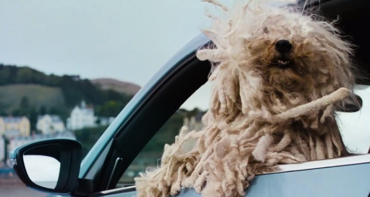 Για κάθε σκύλο υπάρχει το κατάλληλο αυτοκίνητο...
