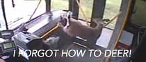 Deer Crashes Through Bus Window [Video]