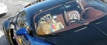 Dog Gets Ride in Bugatti Veyron