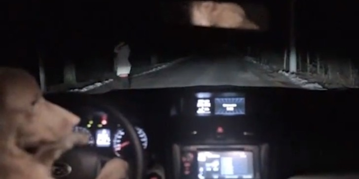 """Dog Plays Dead, Steals Woman's Car in Russian """"Dashcam ..."""