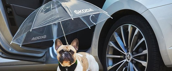 Dog Umbrella Now Available for Skoda Superb in Exchange ...