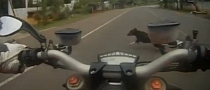 Ducati Streetfighter versus Dog [Video]
