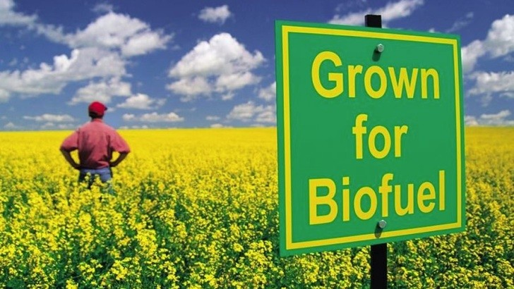 Eu Limits Production Of Biofuels Made From Food Crops