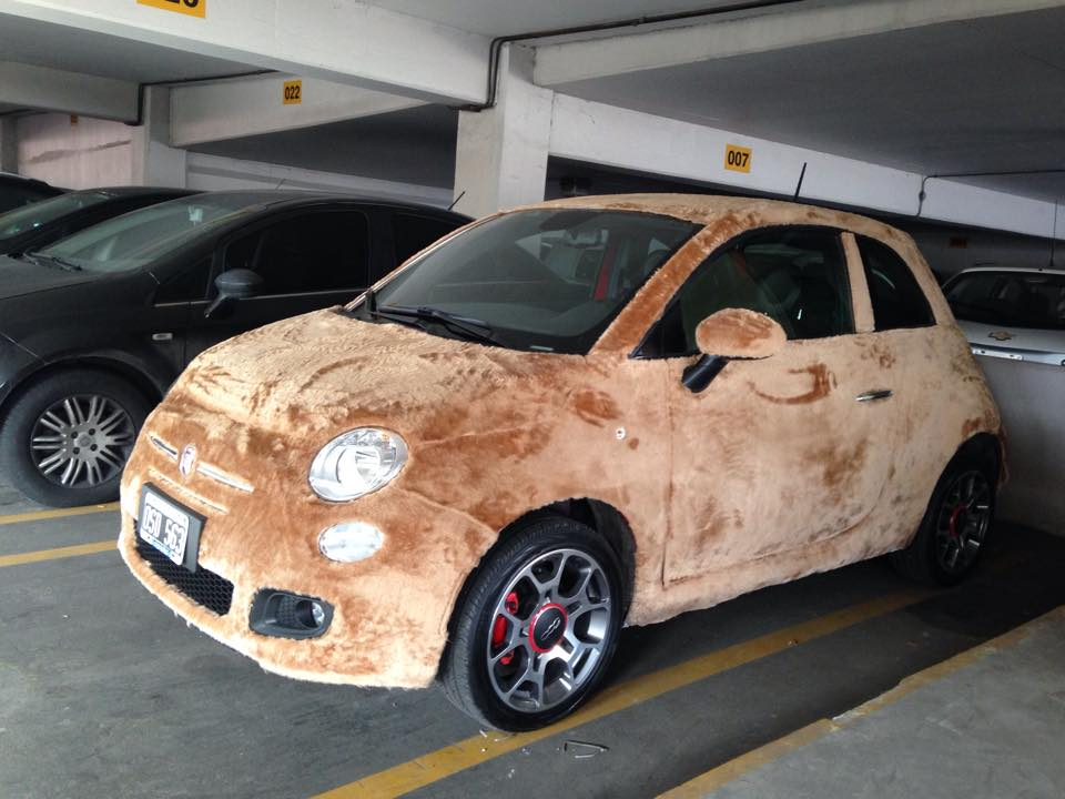 Fiat 500 Wred In Fur Spotted Argentina Looks Like A Labrador