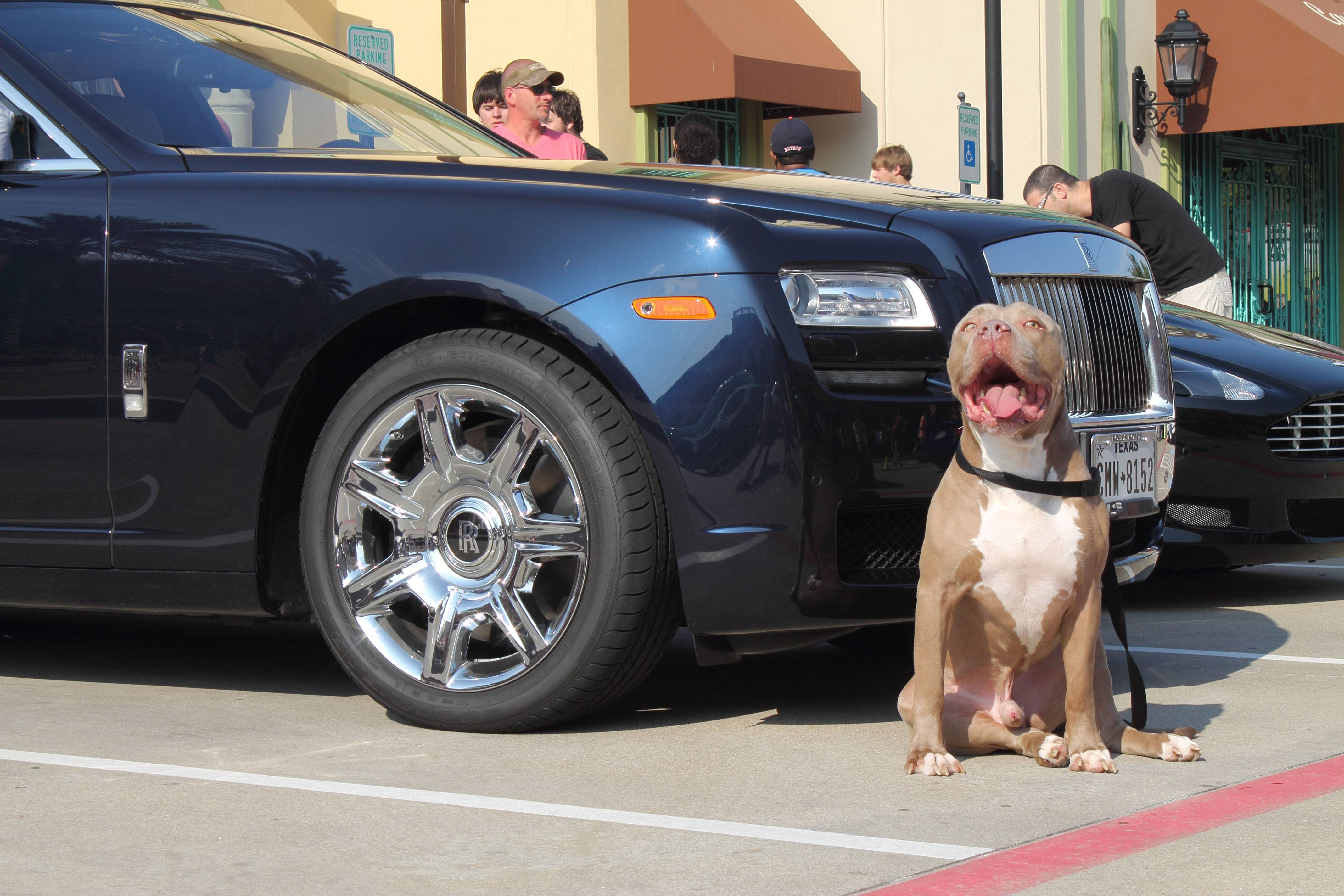 Who Invented The First Car >> Cars and Dogs Is a Really Hot Trend Right Now - autoevolution