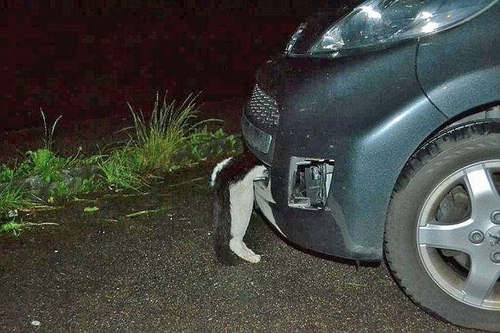 Lucky Cat Survives 70 Mph Car Crash In Switzerland 86598