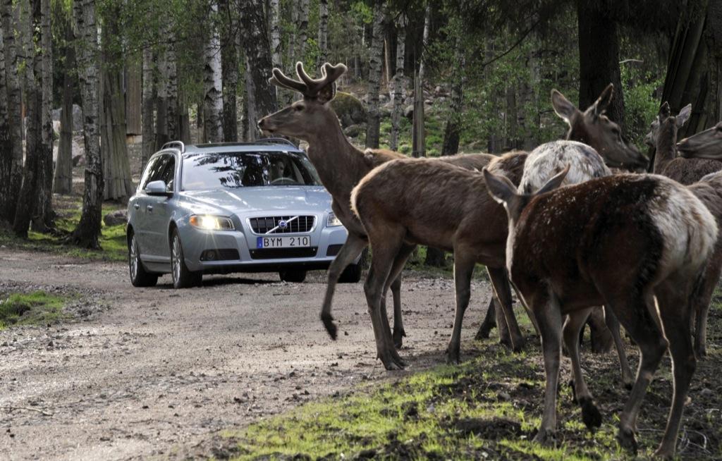 New Volvo Technology to Help Avoid Collision With Wild Animals - autoevolution