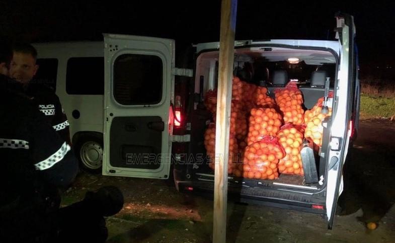 4 tons of oranges stolen in Spain