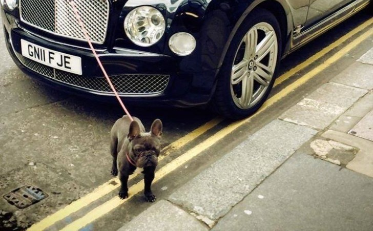 Here's How a Bentley Mulsanne Can Walk Your Dog