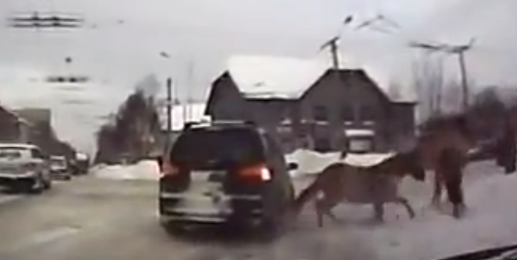 Horse T-Bones SUV in Russia [Video]