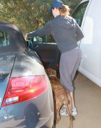 The happy trio: Jessica Biel, her dog, Tina and the Audi TT