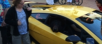 Lamborghini with Real Bear in Passenger Seat Causes California Traffic Jam