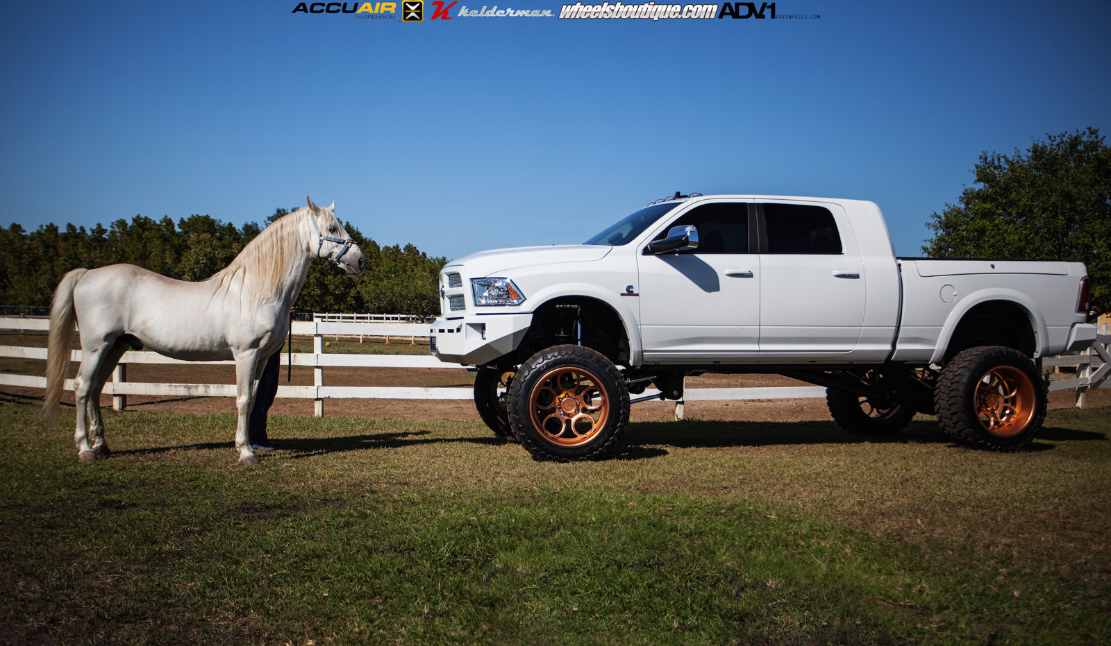 Lifted Ram 2500 On Rose Gold Wheels Meets a Horse ...
