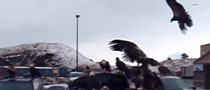 Nissan Pickup Flooded With American Eagles [Video]