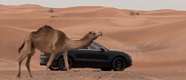 Porsche Releases New Video of Macan Playing with Camels [Video]