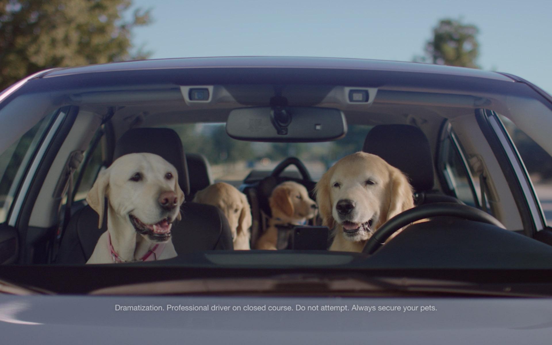 Subaru Crosstrek Commercial Dog Park