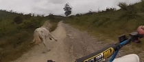 Quad vs Horse [Video]