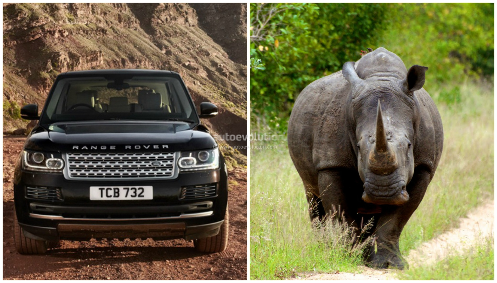 rhino vs range rover the ultimate clash of titans. Black Bedroom Furniture Sets. Home Design Ideas