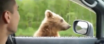 Russian Bear Begs for Food from Cars on Motorway [Video]