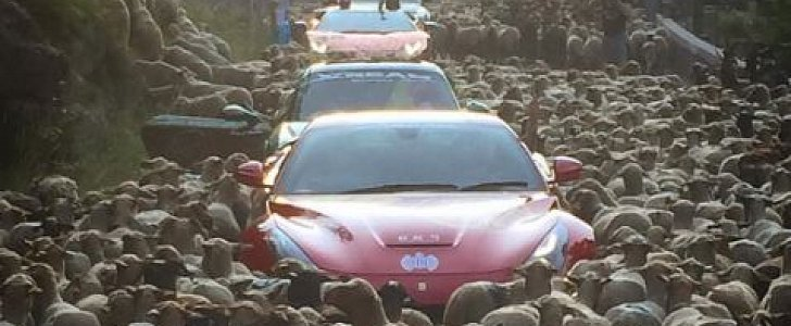 Sheep Traffic Jam Traps Ferrari Lamborghini Porsche Other Supercars In France Autoevolution