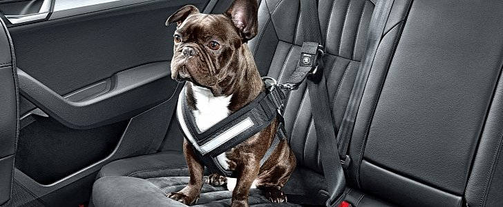 Car Seat Protector For Dogs >> Skoda Launches Seatbelt for Dogs and Other Practical ...