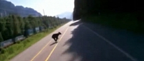 Speeding Biker Hits Bear Cub, Crashes Really Bad [Video]