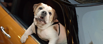 Spike the Bulldog Checks Out the new MINI in its First Commercial [Video]