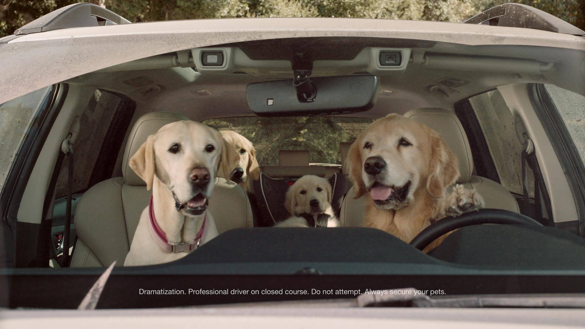 Subaru Commercial Dog Park