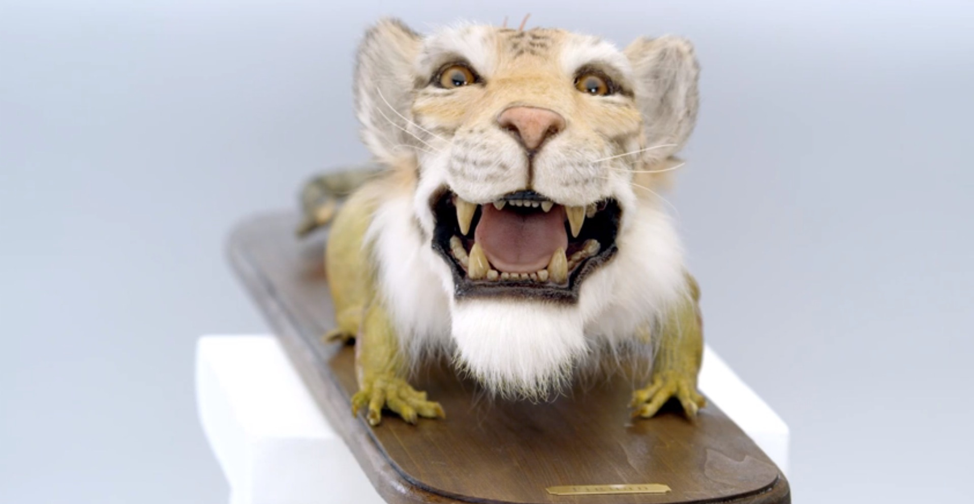 This is a Tiguan: Half Tiger, Half Iguana, Says Volkswagen – Video - autoevolution