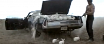 This Is What a Trunk Full of Rabbits Looks Like [Video]