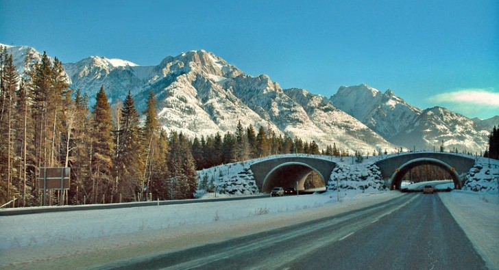 Trans Canada Highway Is The Greenest In The World 1 000