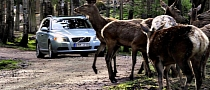 Volvo Developing Animal Avoidance Safety Tech