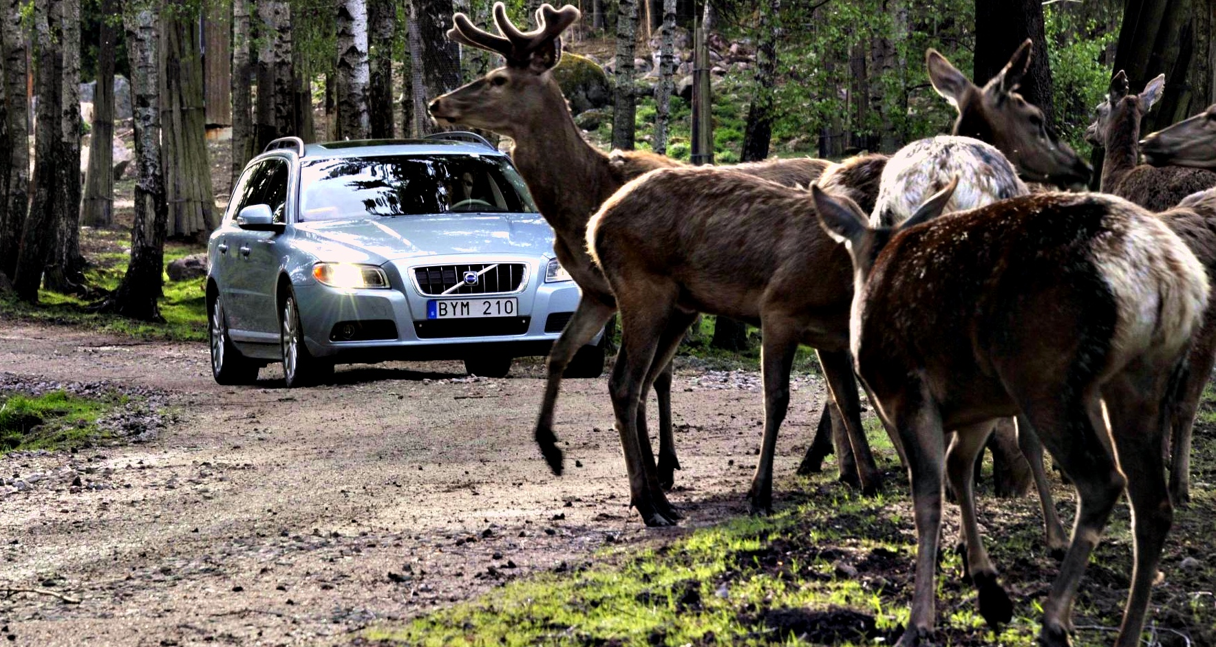 Volvo Developing Animal Avoidance Safety Tech Autoevolution