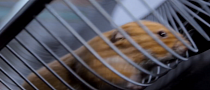 Volvo Trucks Explains How the Hamster Stunt Was Pulled Off [Video]