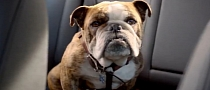 VW Jetta Commercial: Bad Dog Swallowed Keys [Video]