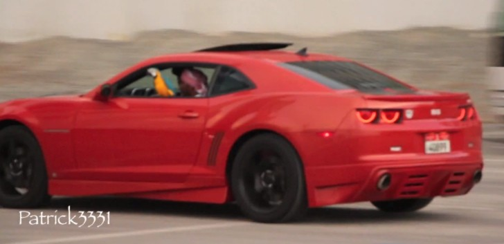 Why Is a Parrot Riding in a Camaro? [Video]